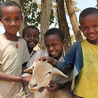 cm_progetti speciali_dona una pecora